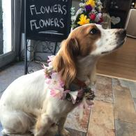 Pet wedding flowers